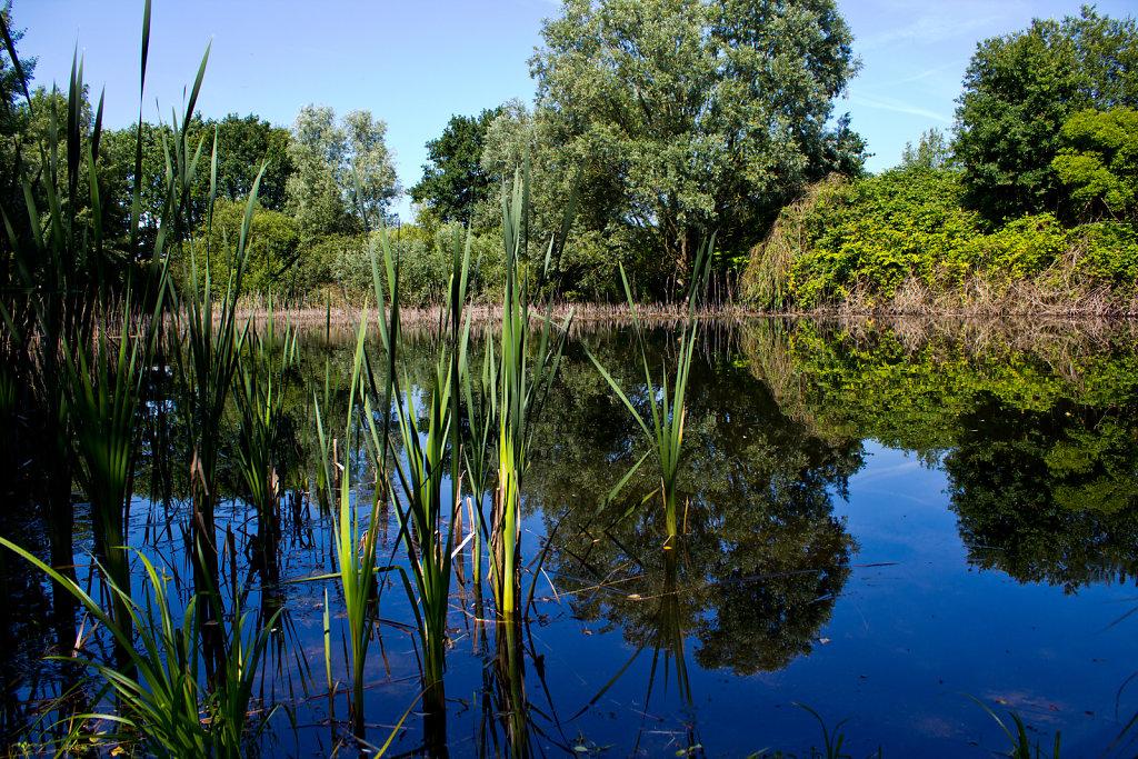 Teich im Moor