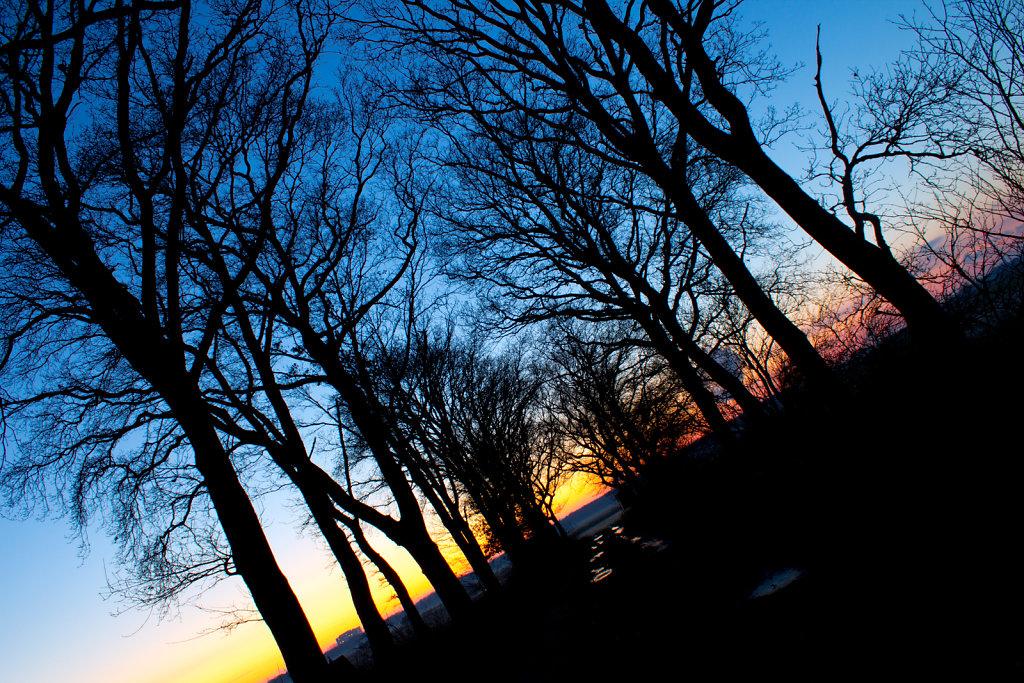 Bäume und Sonnenuntergang