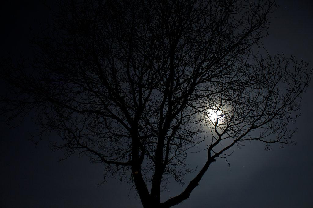 Der Mond hinter einem Baum